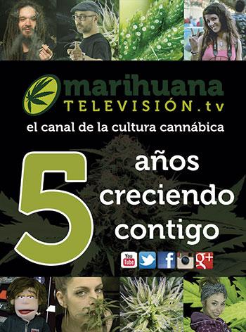 marihuana television