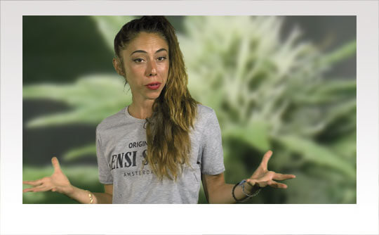 noticias sobre cannabis verano