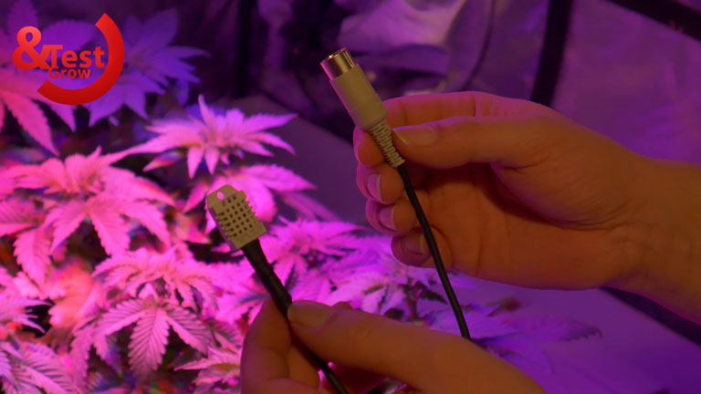 trasplante-de-la-marihuana-13