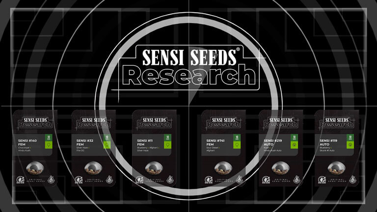Variedades del proyecto Sensi Seeds Research