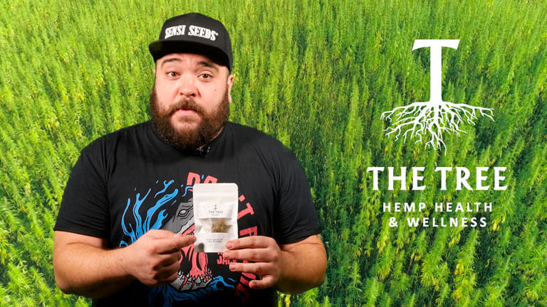 Hacemos la review de la Strawberry CBD de The Tree
