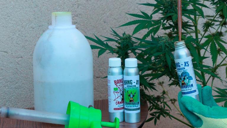 Nuevos fitosanitarios de Cannaboom totalmente naturales en Marihuana Now 99 - Review Unknown Kush Early