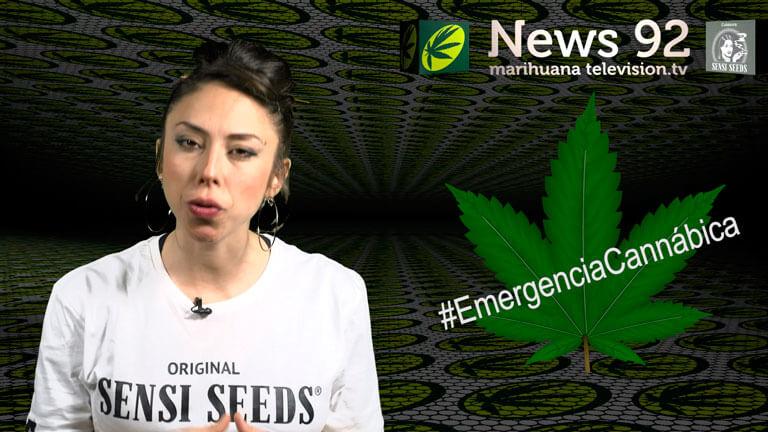 Emergencia cannábica en Marihuana News 92